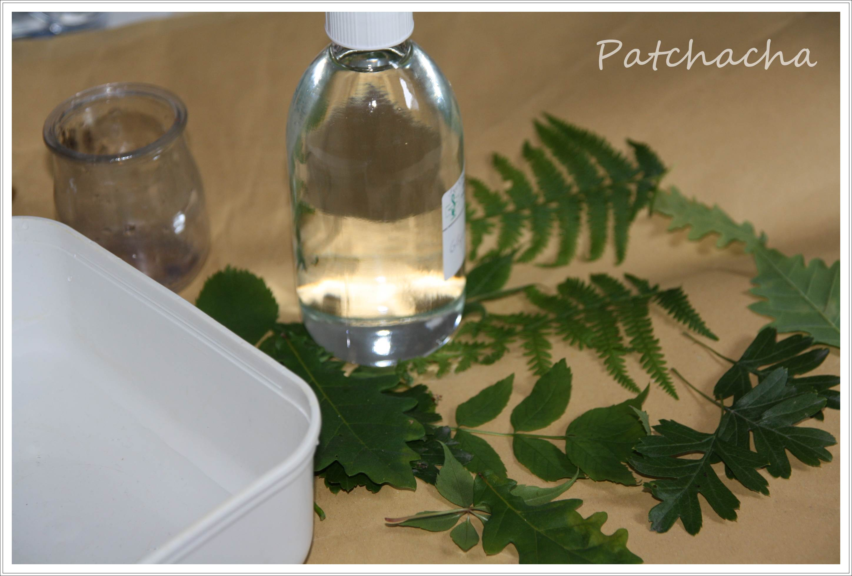 conserver feuilles avec glycérine