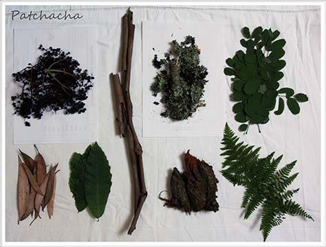 collecte de feuilles