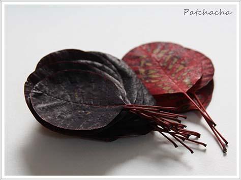 cotinus pour eco dye