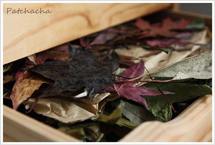eco print, des feuilles