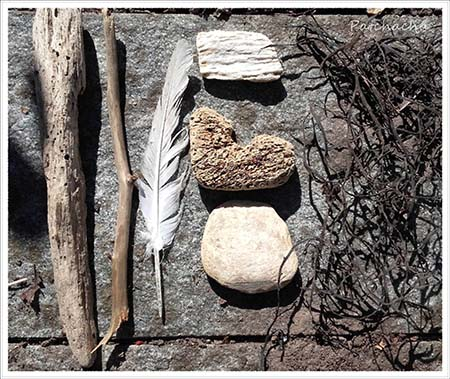 bois flotté, plumes et algues