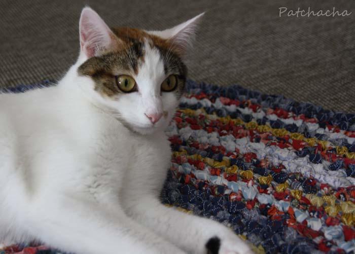 Un chat sur le tapis