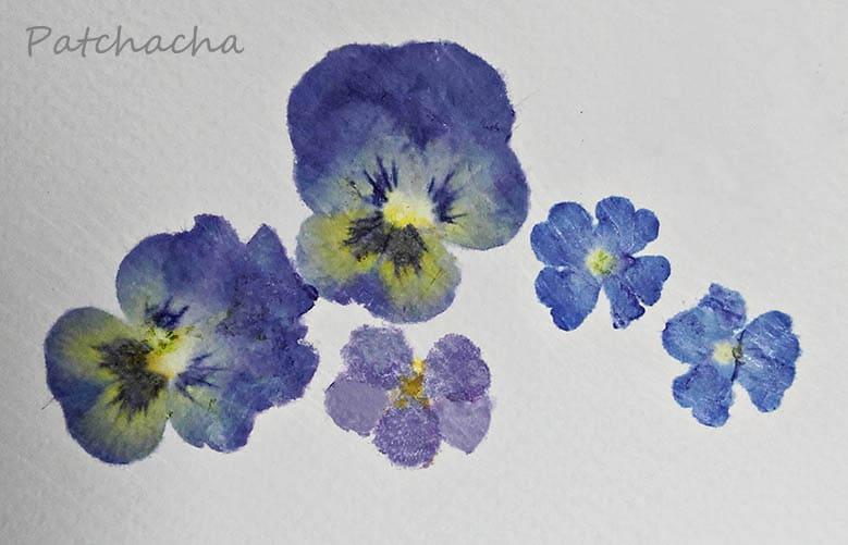 empreintes botaniques